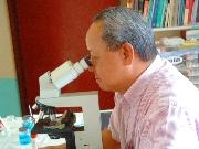 Ostra białaczka szpikowa (AML/ANLL) -portal medyczny