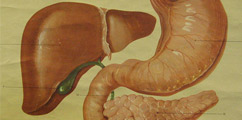 Choroby układu pokarmowego - forum medyczne pytania do lekarzy