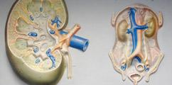 Nefrologia - forum medyczne pytania do lekarzy